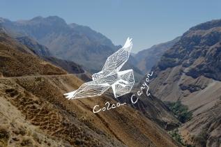 Colca Canyon – Den Condoren sonah
