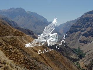 Colca Canyon – Den Condoren so nah