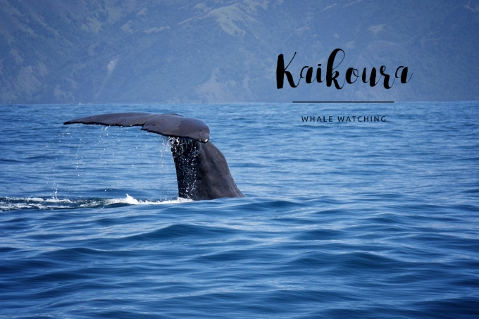 Kaikoura – In touch with the giants